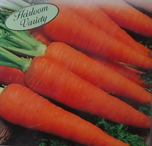 Carrot Danvers Half Long Seed Heirloom - 1 Packet