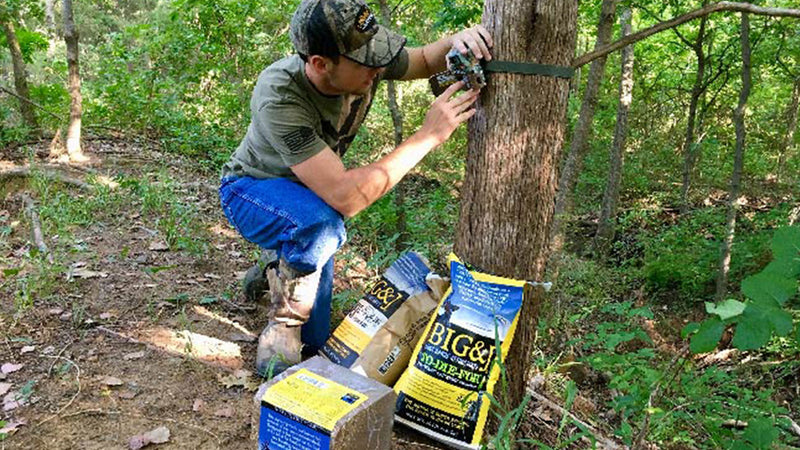Summer Deer Scouting Strategies with Attractants and Trail Cameras