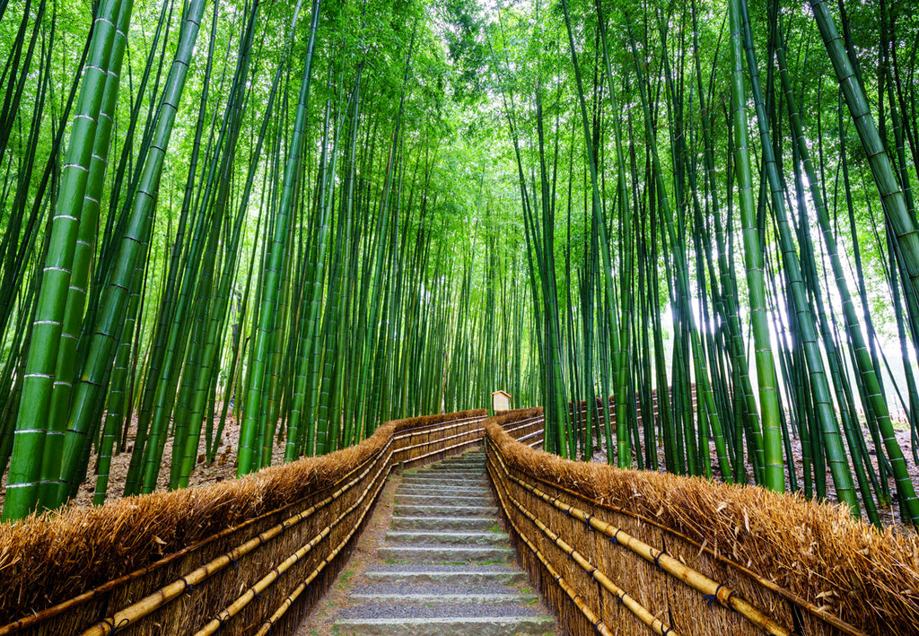 Bamboo forest Kyoto