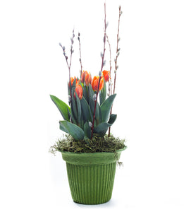 House of Flowers Potted Tulip Plant