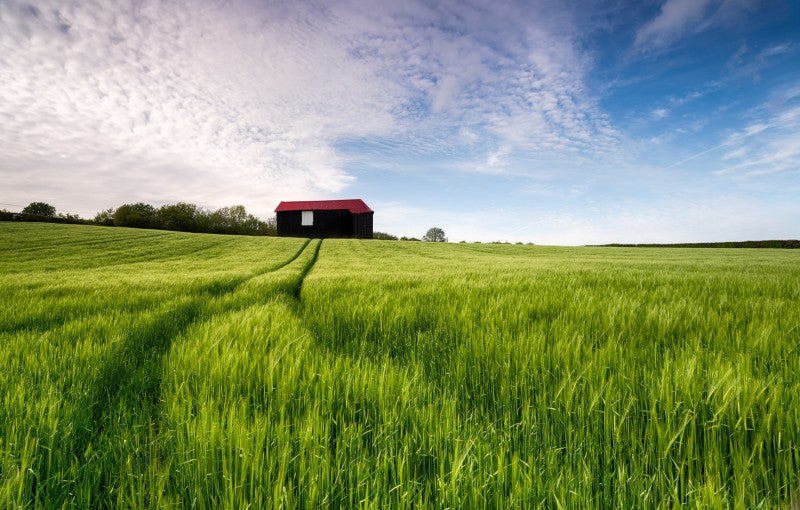 Red roof barn settled on farm with green grasses and blue sky