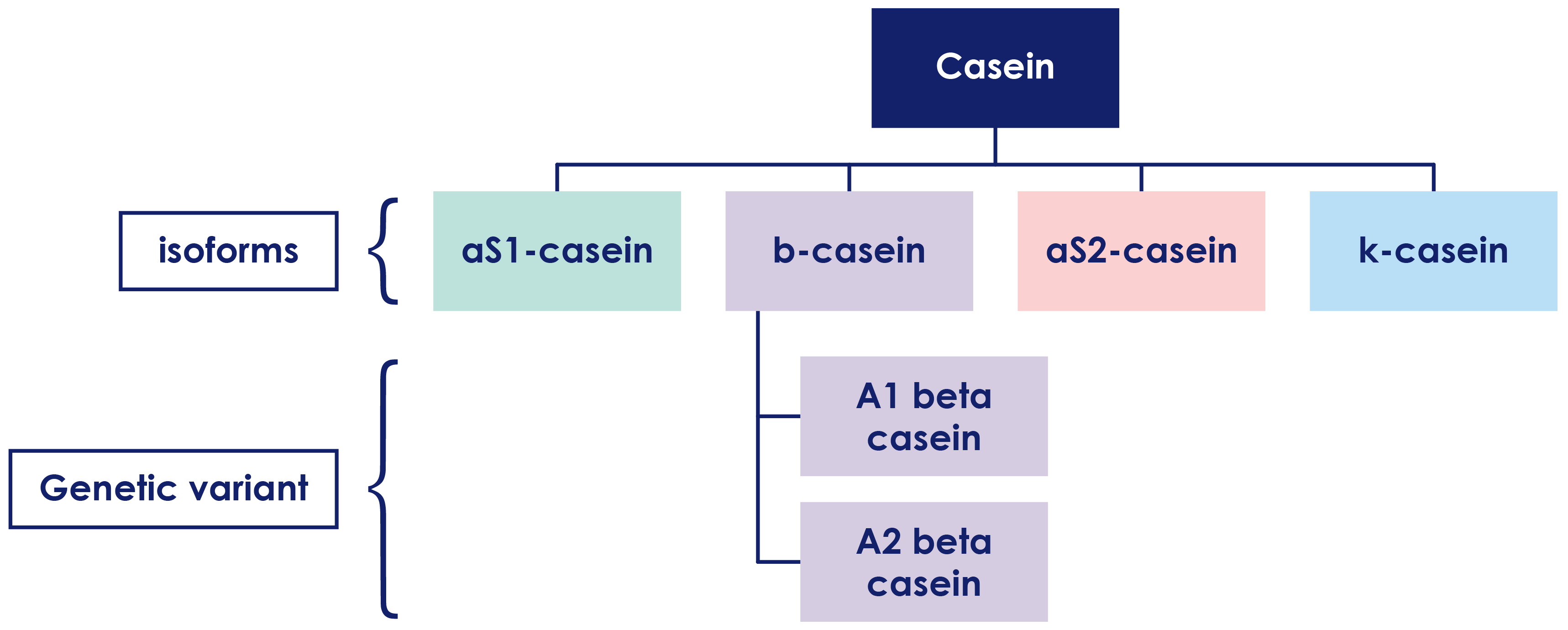 Casein composition chart with A1 and A2 beta casein