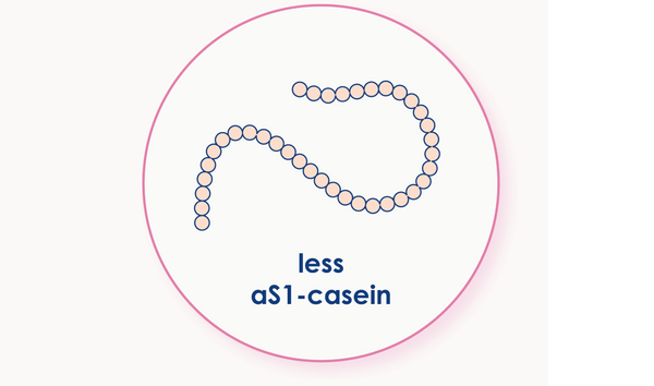 Illustration of a chain of aS1-casein protein