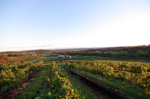 Vineyard Report – December 2013