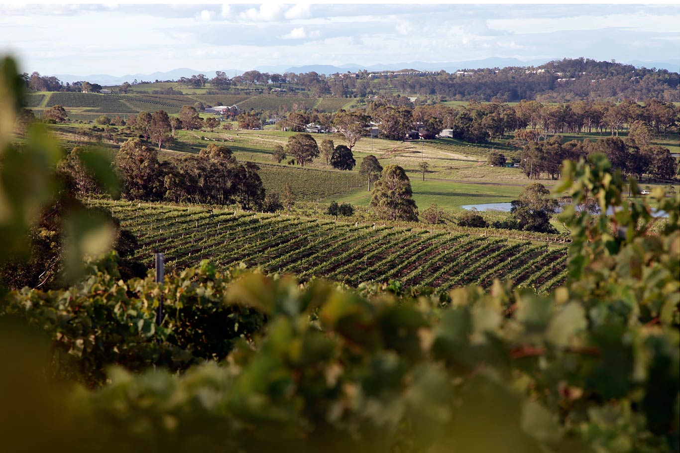 Australia's Best Winery Experiences