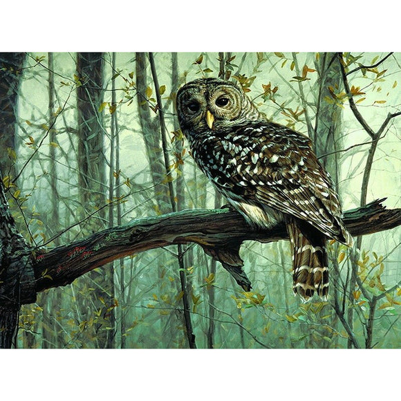 Owl Animals Frameless Picture DIY Painting By Numbers  Acrylic Picture Kits Drawing Paint On Canvas