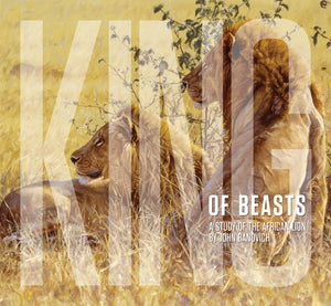 KING OF BEASTS: A Study of the African Lion by John Banovich