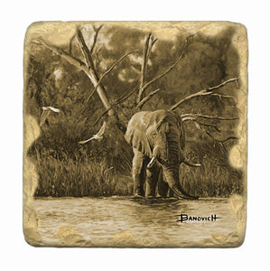 Banovich Wild Accents-African Elephants-Coasters