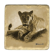 Banovich Wild Accents-Big Cats Coasters