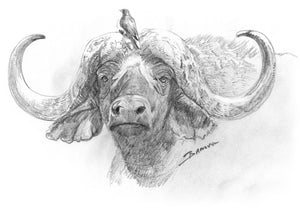 John Banovich - Cape Buffalo Sketch