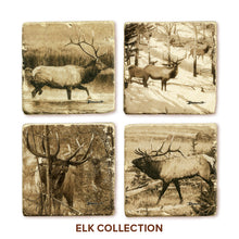 Banovich Wild Accents-Elk Collection-Coasters