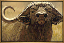 John Banovich - The Big Five Collection- Cape Buffalo