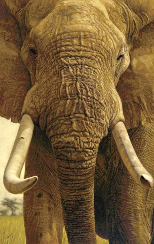 John Banovich - The Big Five Collection- Elephant