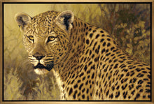 John Banovich - The Big Five Collection- Leopard