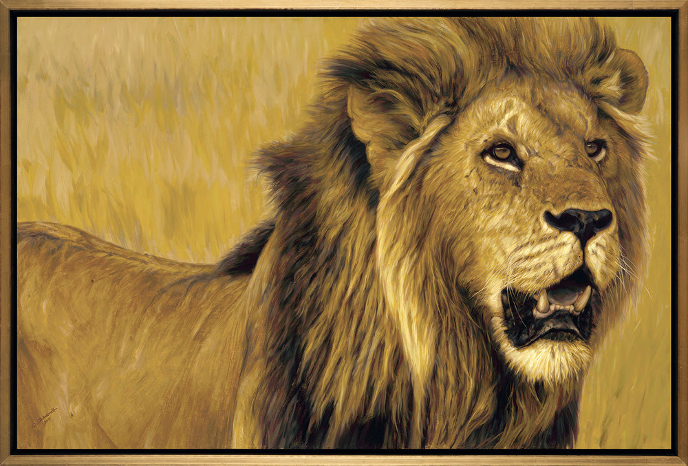 John Banovich - The Big Five Collection- Lion