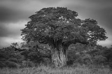 Riccardo Tosi - Tree of Life - Fine Art Photography