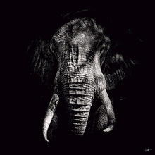 Riccardo Tosi - Tusks - Fine Art Photography