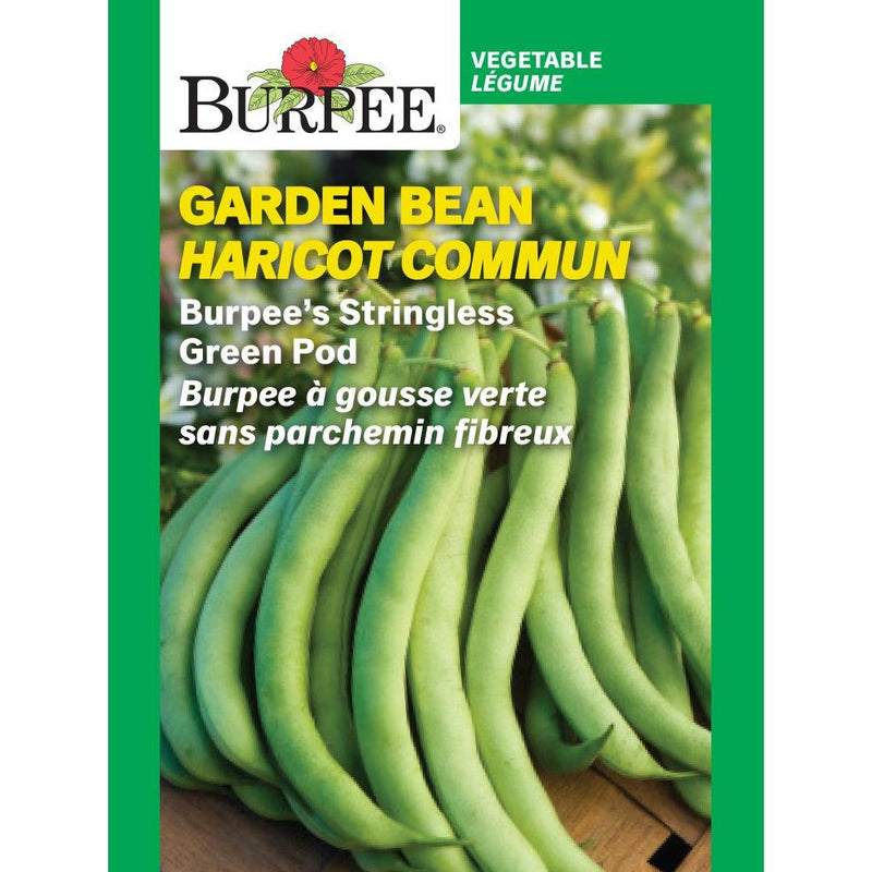 Garden Bean 'Stringless Green Pod'