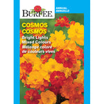 Cosmos 'Bright Lights Mixed'