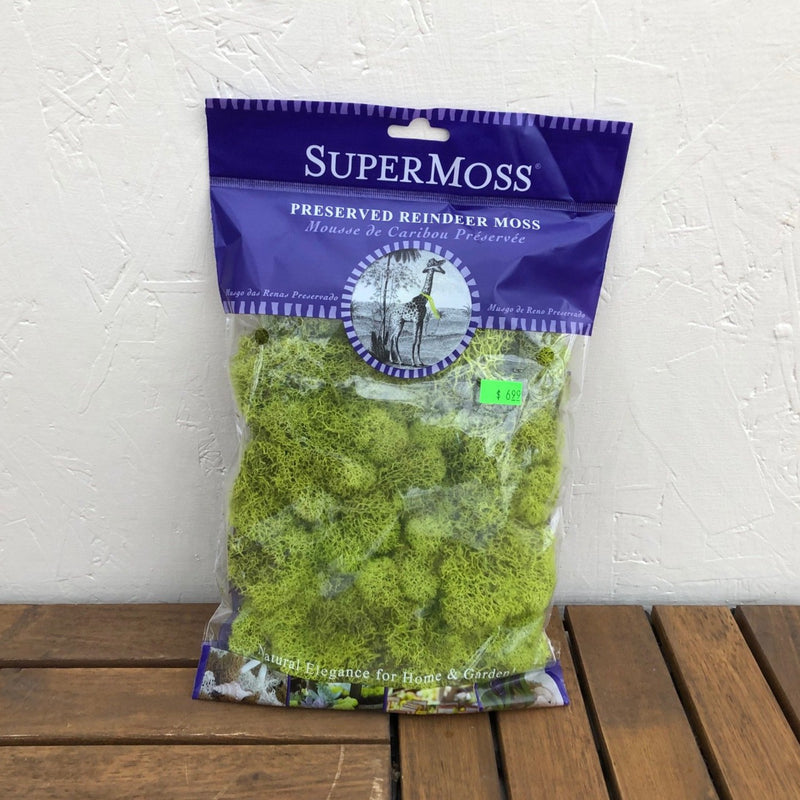 Preserved Reindeer Moss (Chartreuse)