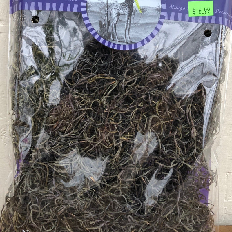 Preserved Spanish Moss (Coffee)