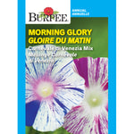 Morning Glory 'Carnivale di Venezia Mix'