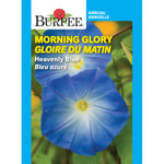 Morning Glory 'Heavenly Blue' (Heirloom)