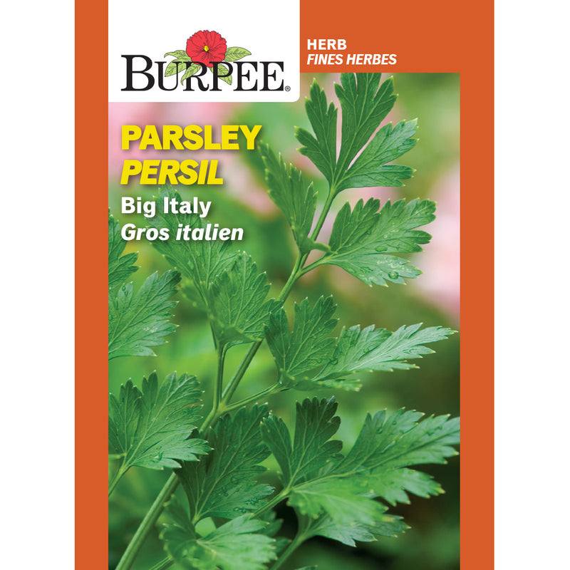 Parsley 'Big Italy'