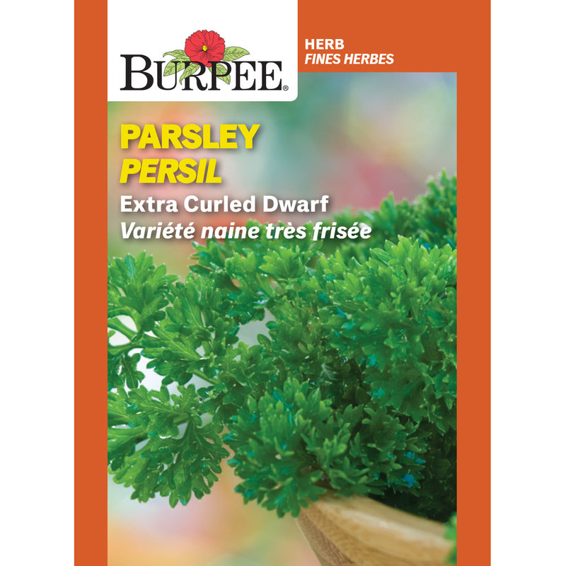 Parsley 'Extra Curled Dwarf'