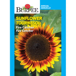 Sunflower 'Fire Catcher'