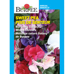 Sweet Pea 'Burpee's Galaxy'
