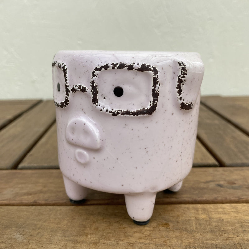 Sophisticated Pig Planter