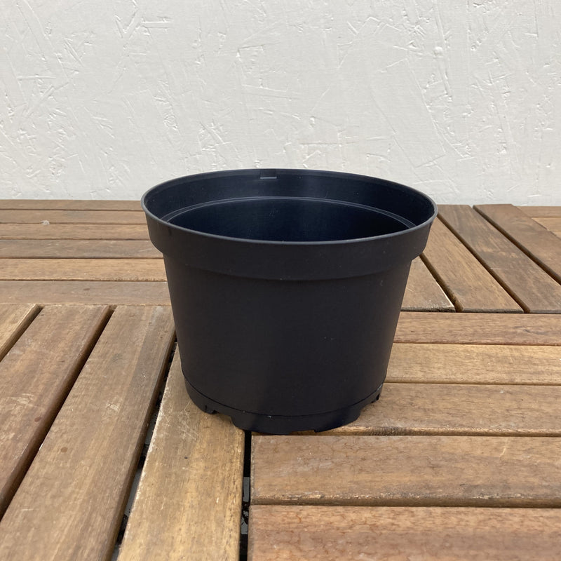 "6"" Black Nursery Pot"