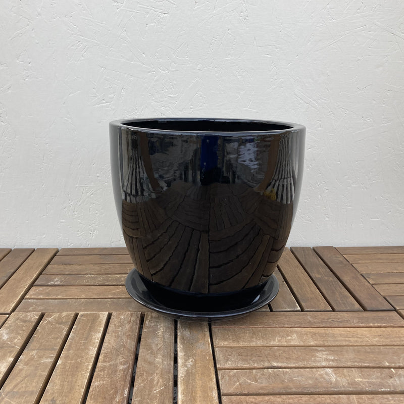 Black Licorice Planter
