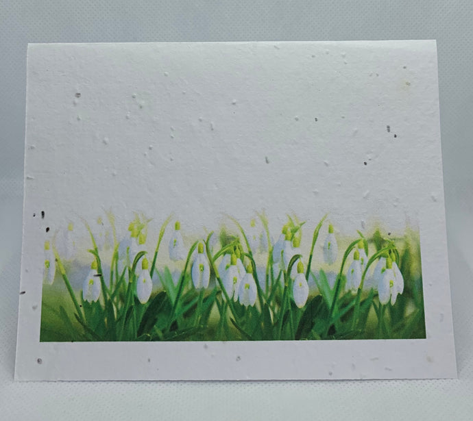 A2 SEED PAPER CARD