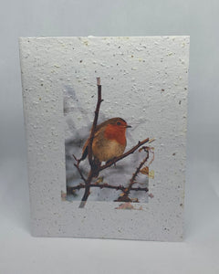 M20 SEED PAPER CARD