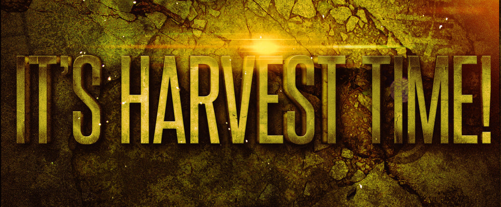 It's Harvest Time Series