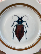 Load image into Gallery viewer, Beetle plate, wall decoration