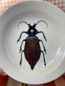 Beetle plate, wall decoration