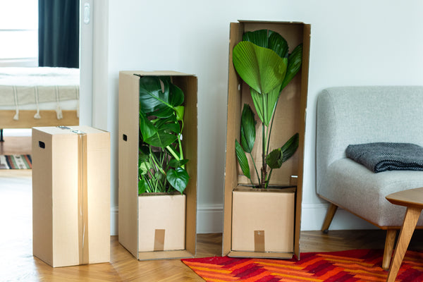 boxes-plants-for-humans