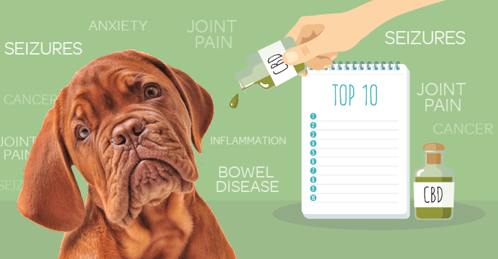 Why CBD Oils Are The Best Thing For Your Pets