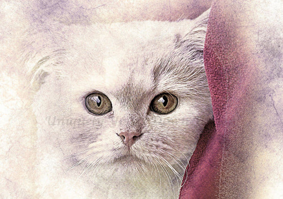 Cat 04 Diamond Painting Kit