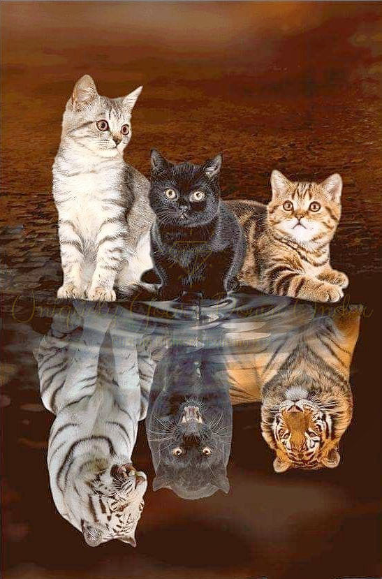 Reflections of the Cats