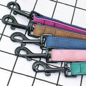dog accessories collars and leashes