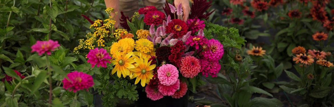 Growers Choice Bulk Buckets | Dahlia May Flower Farm, Trenton ON