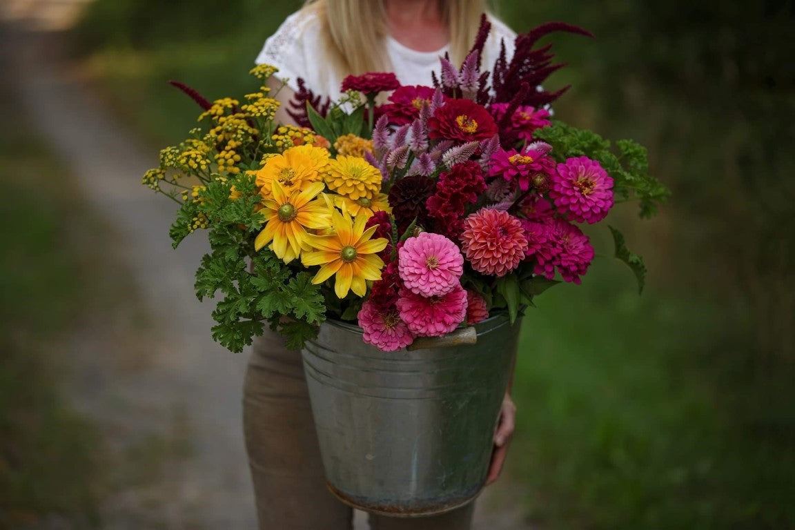 Growers Choice Summer | Dahlia May Flower Farm