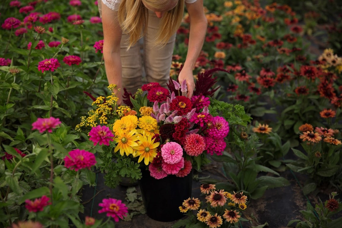 Growers Choice | Dahlia May Flower Farm