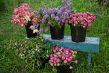 Buy Spring Design Workshop Tickets Online - Dahlia May Flower Farm