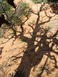 Jpeg Photo Download 158 Pinon Shadow Arches National Park Utah