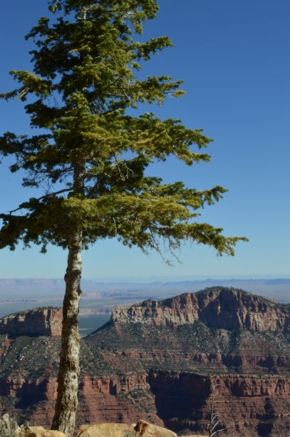 Jpeg Photo Download 192 Ponderosa - Grand Canyon National Park